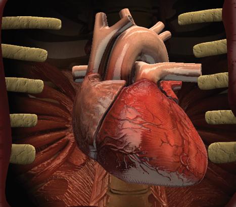 Heart AR