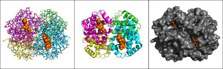 """Molecular visualization: Για μια πιο σύγχρονη """"έρευνα"""" των βιομορίων"""