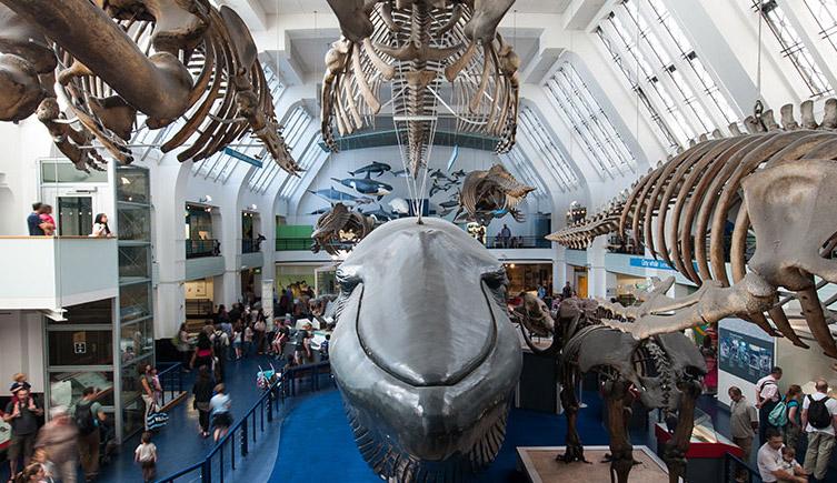 Μία μέρα στο Μουσείο: τα ζώα με μεγεθυντικό φακό.