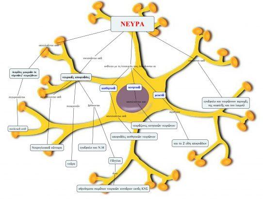 Εννοιολογικός χάρτης: Όταν η γνώση παντρεύεται με το σχέδιο..