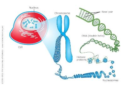 Χρήση Φωτόδεντρου στην διδασκαλία του DNA