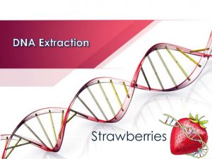 dna-extraction-strawberry-lab-spring-2015-1-638