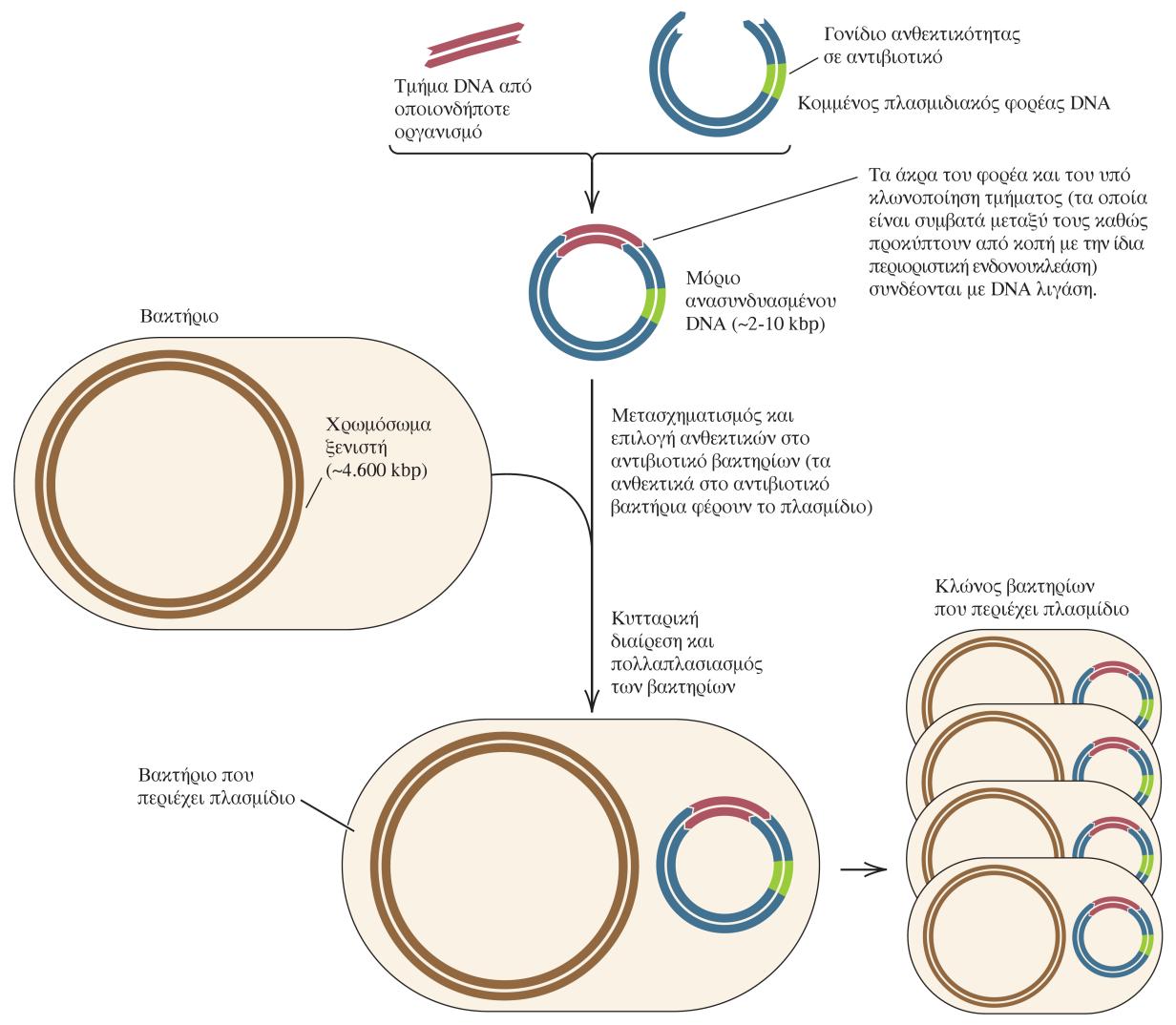 συμβατότητα με το DNA φουτζίγια ταϊσούκε dating
