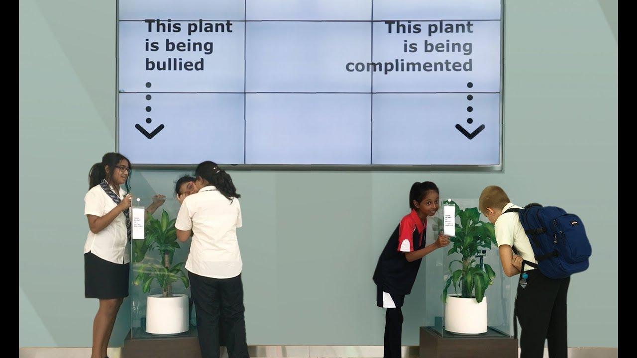 Πώς αντιδρούν τα φυτά στο bullying;